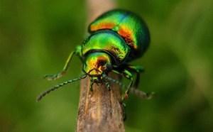beetle_2015_3_17_9_46_22_b2